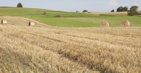 Ein Feld mit Strohballen und grünen Wiesen im Hintergrund