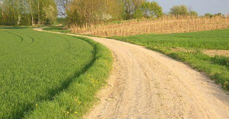 Weg zwischen saftig grünen Wiesen und Bäumen am Ende